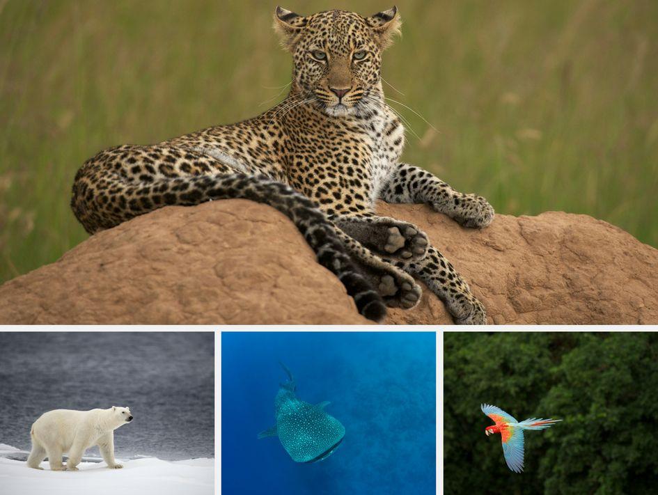 Wilde Tiere in ihrer Umgebung - Collage