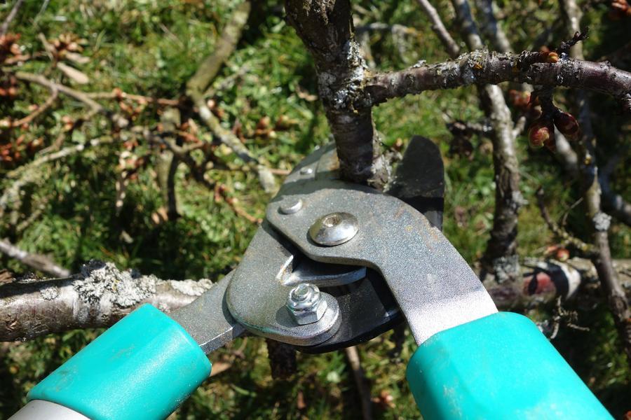 Gartenarbeit - Heckenschere schneidet einen Ast