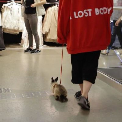 CargoCult, rabbit in primark, 2018, Videostill