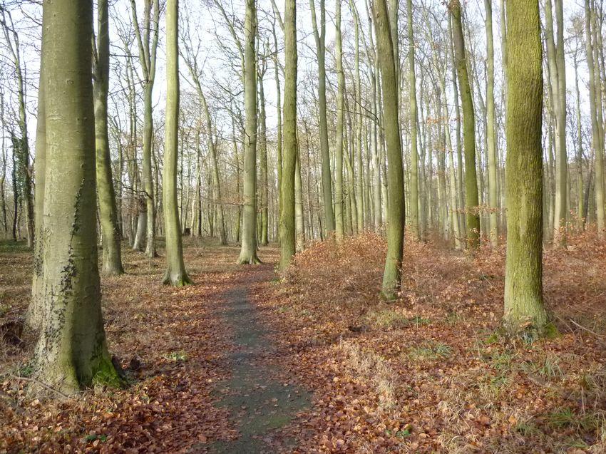 Bestattungswald Schiffenberg