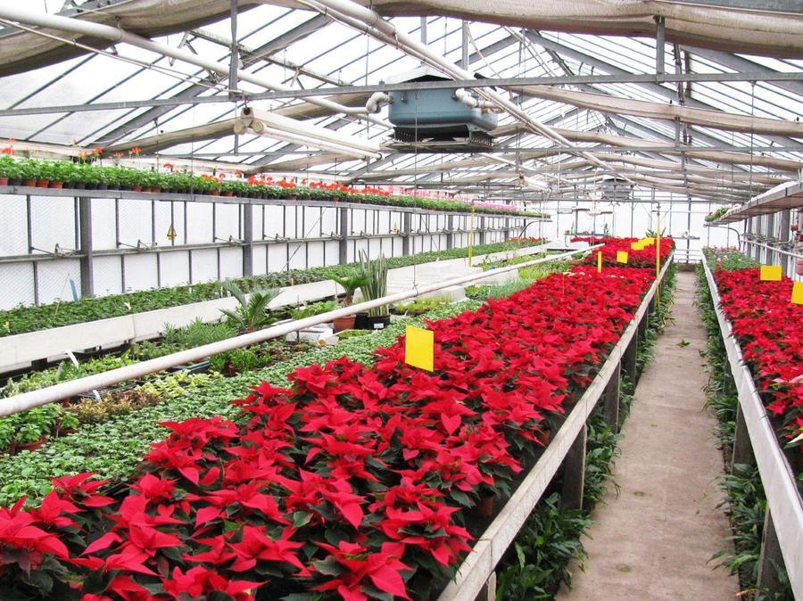 Ausbildung zur Gärtner/in Fachrichtung Zierpflanzenbau