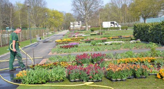 Blumen für die LGS in der Wieseckaue