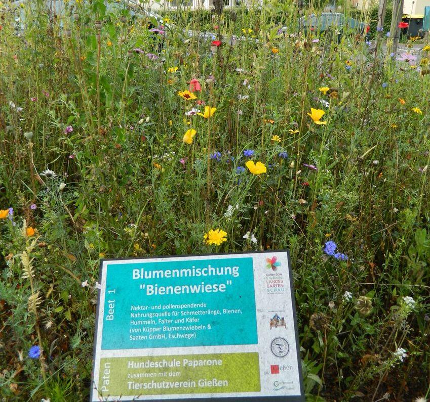 Im Frühjahr eingesäte Blumenmischung ''Bienenwiese'' blüht in voller Pracht