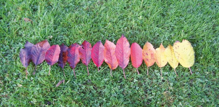 Eine Reihe Laubblätter liegt farblich geordnet auf einer Wiese