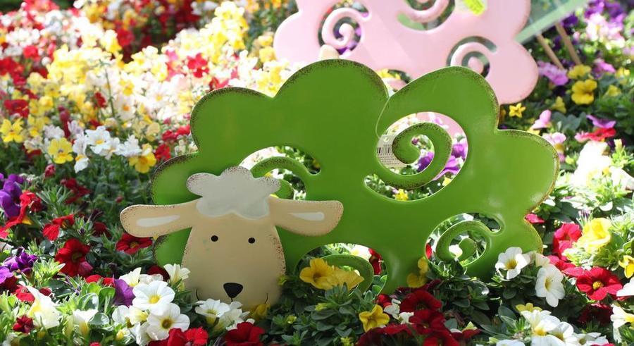 Garten-Frühling-Lebensart - Blumendeko