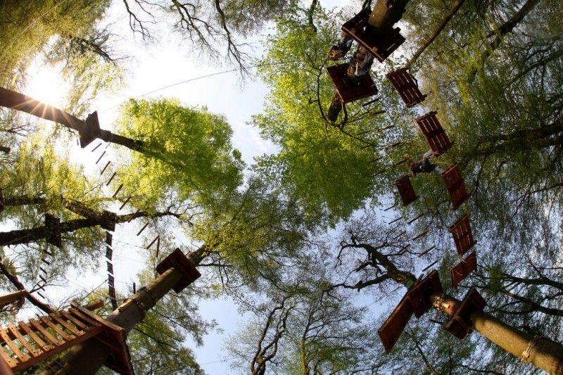 Blick in die Baumkronen im Gießener Kletterwald