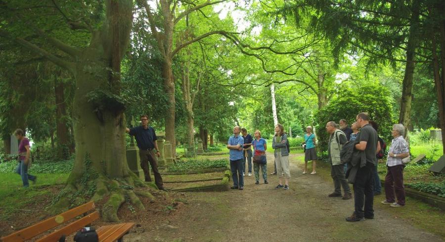 Naturschutzwanderung zum Thema Stadtbäume im Juni 2016