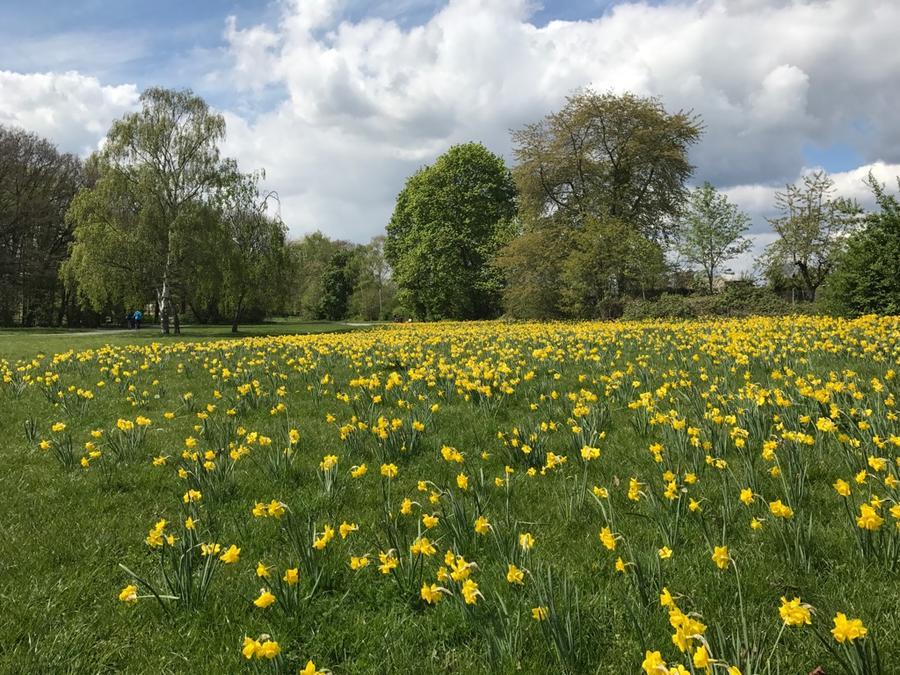 Blumen im Stadtpark Wieseckaue