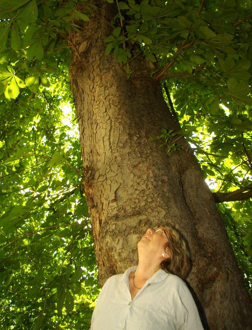Eine frau blickt in die Krone eines Baums