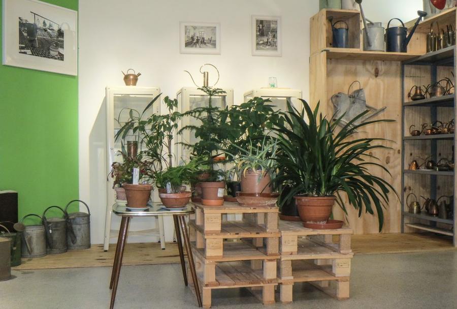 Pflanzenlieferung von botanoadopt im Gießkannenmuseum