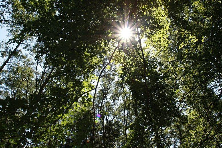 Baumkronen im Stadtwald