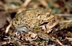 Amphibien 2