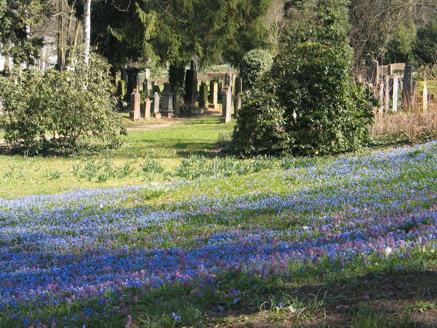 Alter Friedhof - Blaue Blüten