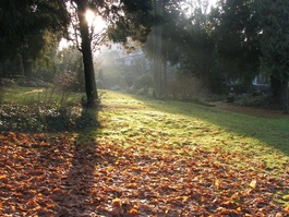 Alter Friedhof im Herbst