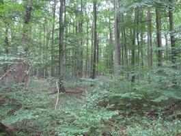 Bestattungswald am Schiffenberg
